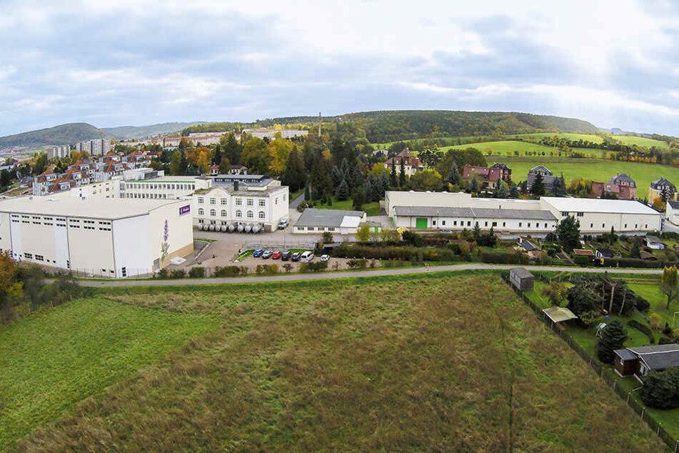 Seit 1906 stellen die Bombastus-Werke in Freital Tee und Arzneimittel her.