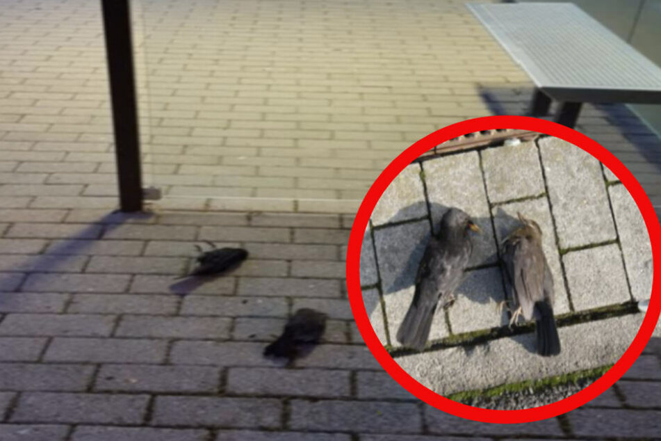 Leipzigs freut sich über neue Wartehäuschen: Diese sind Todesfallen für Vögel!