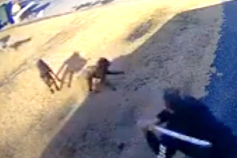 Wild gewordene Hunde greifen Mann an! Dann zückt er eine Metallstange