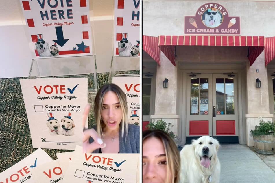 Copper the dog seems to be running for mayor of his local town, and people are already voting for him.