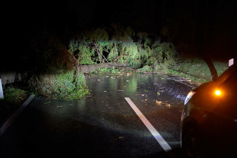 Ein umgestürzter Baum liegt auf einer Kreisstrasse bei Lochum (Rheinland-Pfalz) im Westerwald.