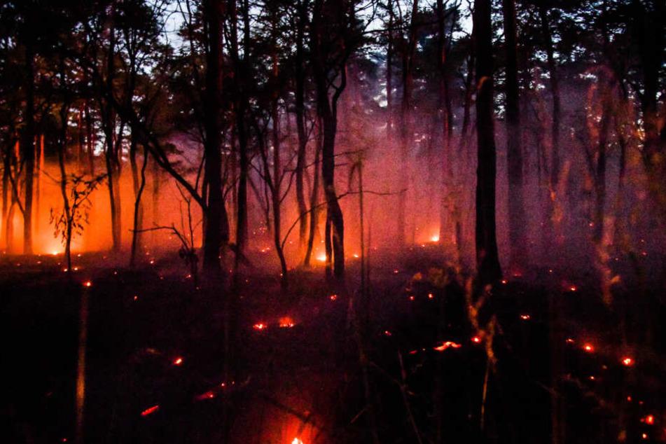 130 Hektar brannten bei Eisenhüttenstadt.