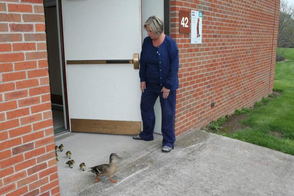 Eine Mitarbeiterin öffnet der Entenfamilie die Tür.