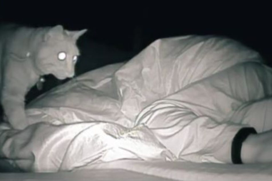 Woman is dumbstruck when she finds out what her cat has been doing at night