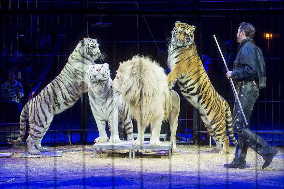 Der Circus Krone kommt Ende August nach Leipzig. Eigentlich wollte die Stadt Zirkusbetrieben mit Wildtieren den Zutritt zum Kleinmesseplatz verwehren.