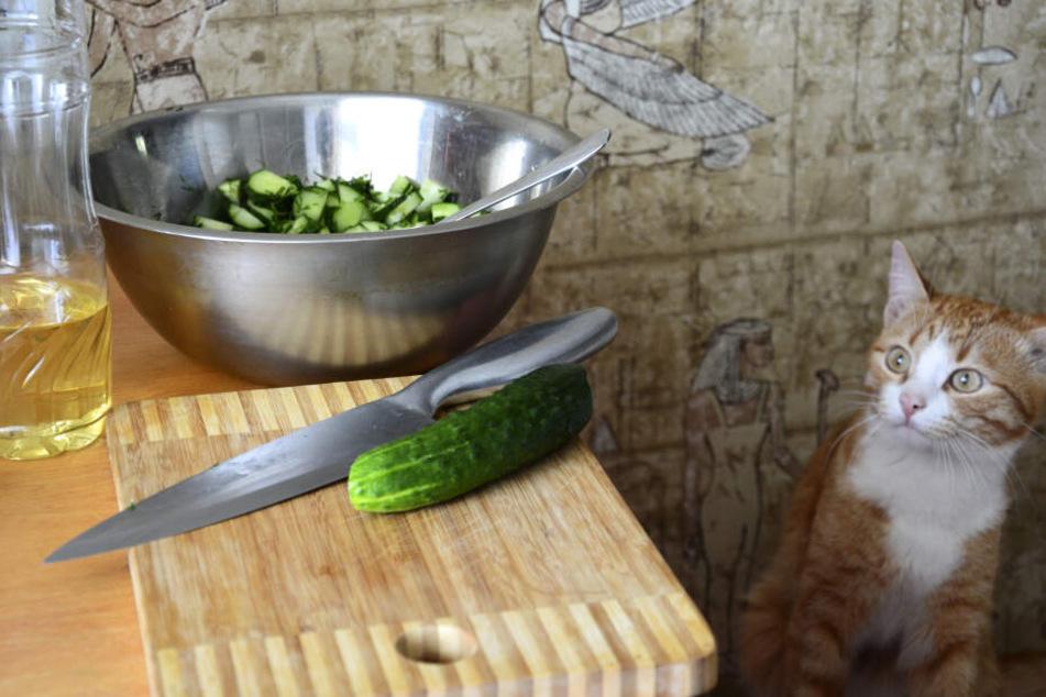 Warum haben viele Katzen Angst vor einer Salatgurke?