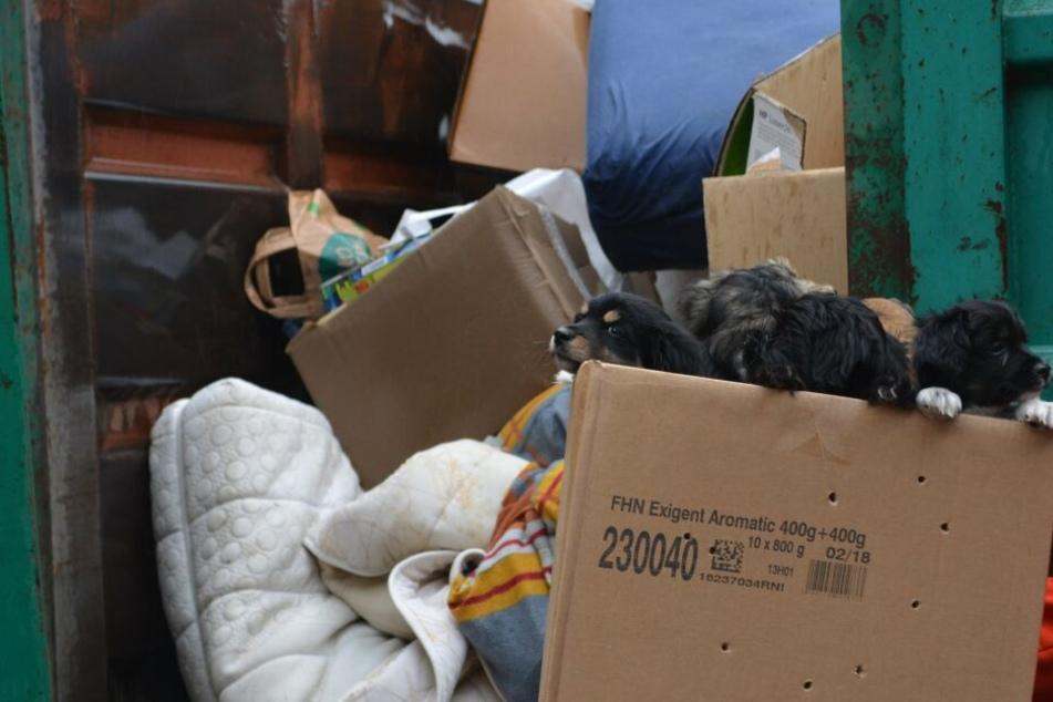 Unfassbar: In dem ganzen Gerümpel fand eine Bewohnerin einen Karton mit süßen Hundewelpen.