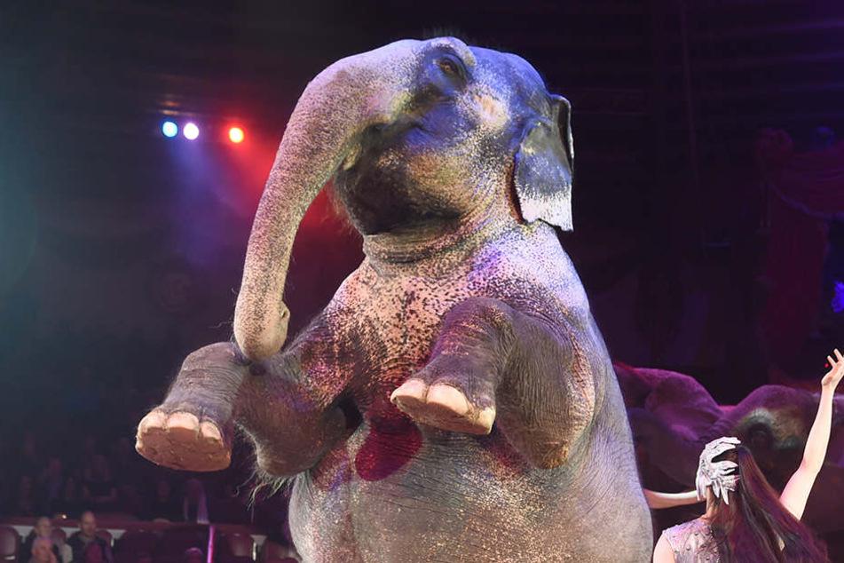 Elefant stürzt bei Vorstellung in Zuschauerbereich