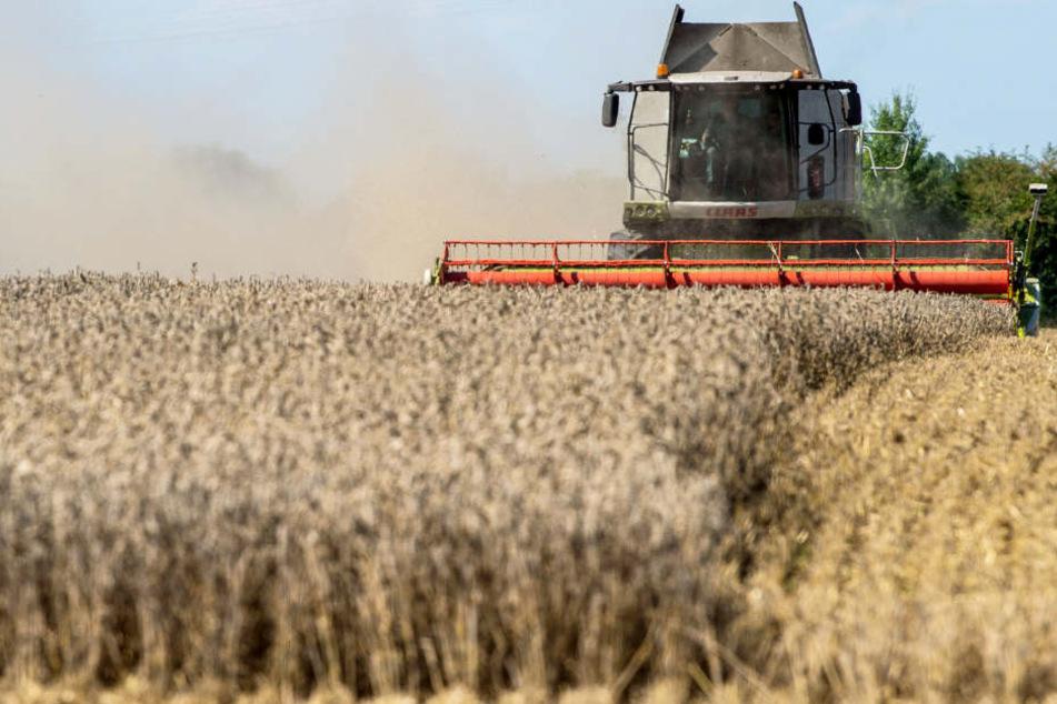 Die Landwirtschaft spielt im Freistaat Bayern weiterhin eine große Rolle. (Symbolbild)