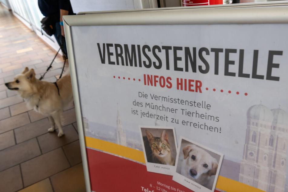 Das Tierheim München hat eine extra Vermisstenstelle für Tiere.