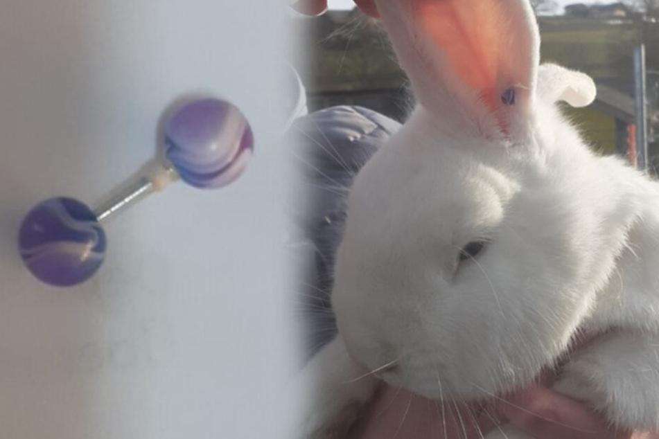 """Das Kaninchen war mit einem Piercing im Ohr """"geschmückt""""."""