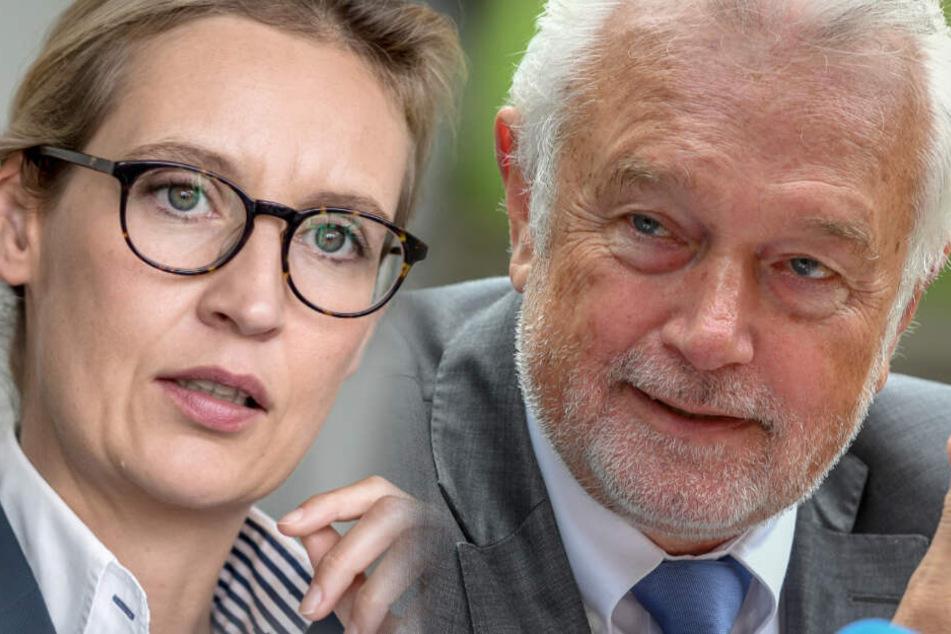 Wegen Spendenaffäre: FDP-Kubicki rechnet mit politischem Ende von AfD-Weidel