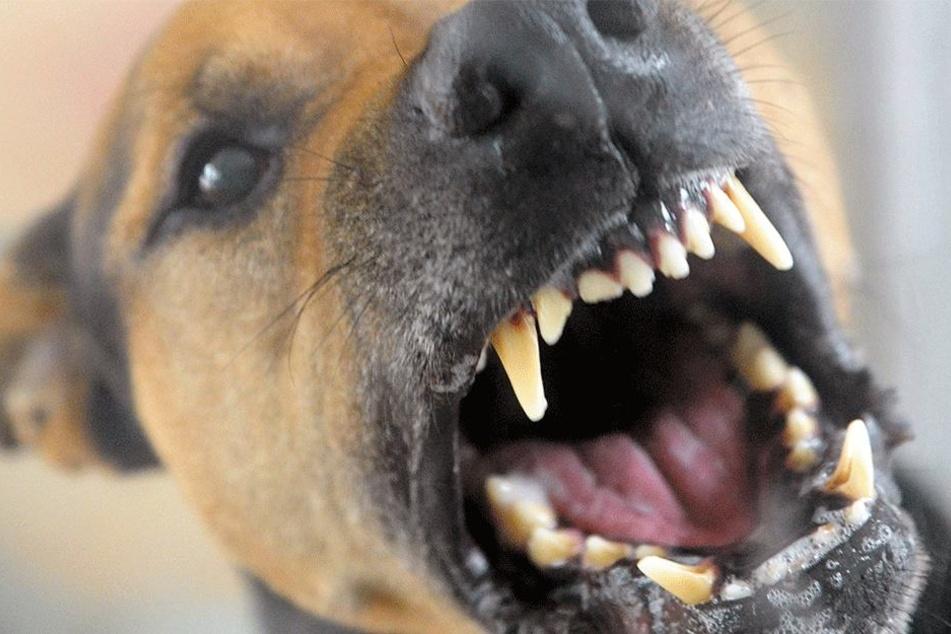 Mann soll Frau nach brutaler Vergewaltigung zu Sex mit Hund gezwungen haben