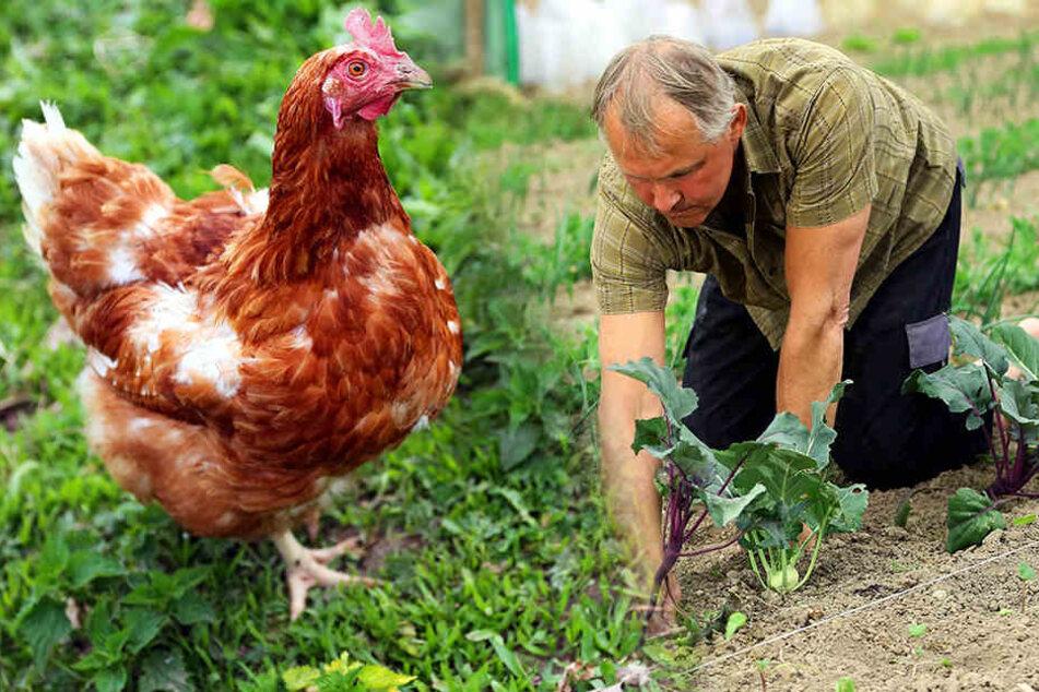 Olaf Schirmer kniet sich jeden Tag voll in die Gartenarbeit rein. Denn es gibt immer was zu tun ...