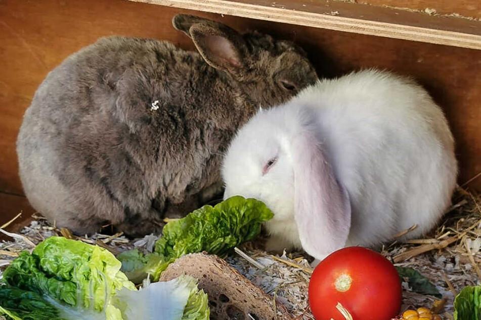 Diese beiden Kaninchen wurden gestohlen.
