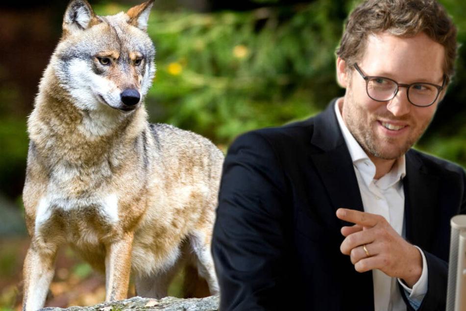 """Grüner Minister verlängert Frist für Tötung von """"Problemwolf"""""""