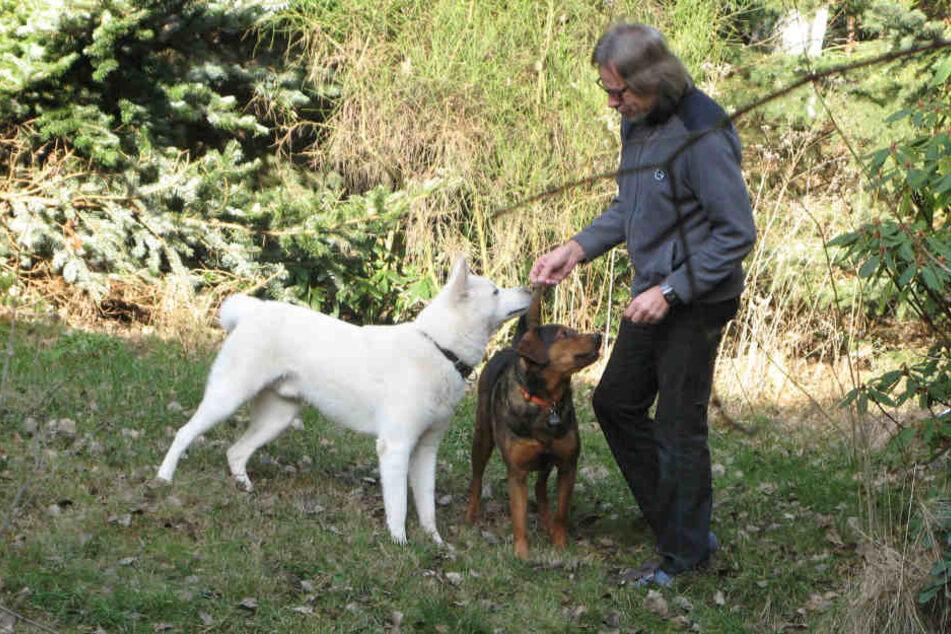 """Schäferhund """"Snow"""" wohnt vorerst bei Nachbar Ralph Winkler."""