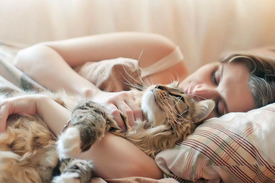 Katzenbesitzer haben Glück gehabt: Ihre Vierbeiner schränken ihr Sex-Leben nicht allzu sehr ein.