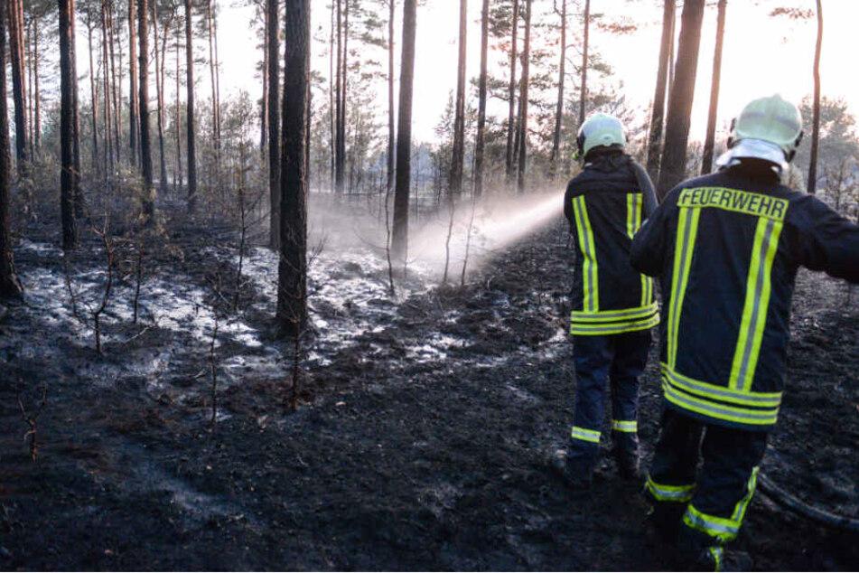 Feuerwehrleute löschen Glutnester auf dem ehemaligen Truppenübungsplatz.