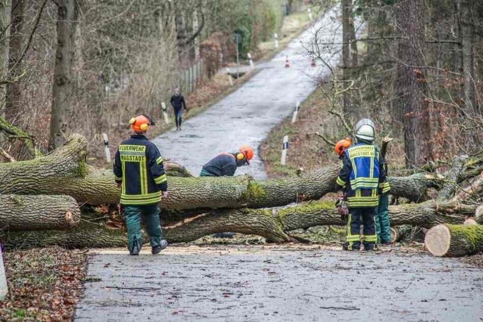 Baden-Württemberg, Magstadt: Einsatzkräfte der Feuerwehr bergen einen Baum.