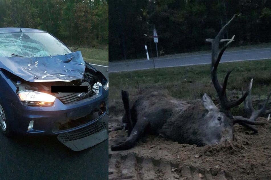 Der Autofahrer hatte Glück, der Hirsch überlebte dagegen nicht.