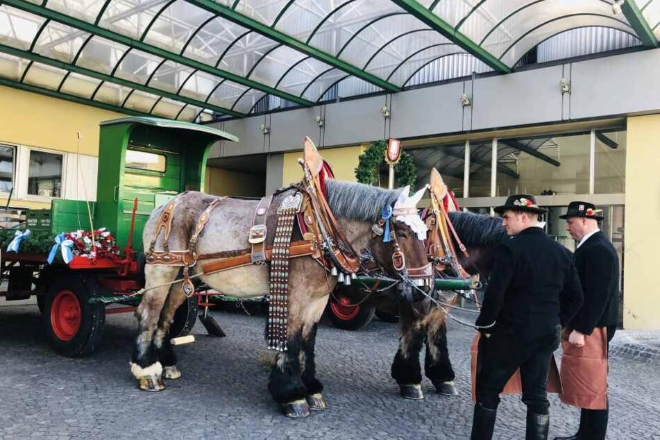 Nach solchen Pferdegespannen solltet Ihr Ausschau halten: Spaten schenkt am Wochenende Freibier in der Innenstadt aus.
