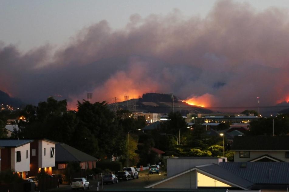 In Neuseeland wütete tagelang ein Waldbrand. Nun konnte er endlich eingedämmt werden.