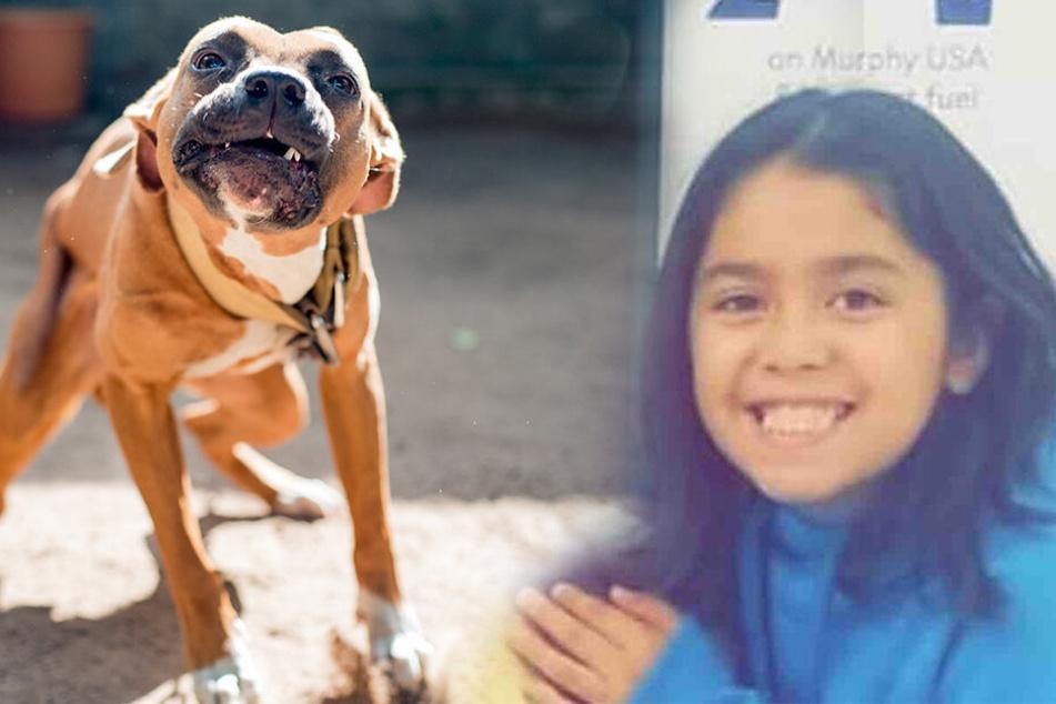 Kleines Mädchen wird von drei Pitbulls von ihrem Fahrrad gerissen und zu Tode zerfleischt