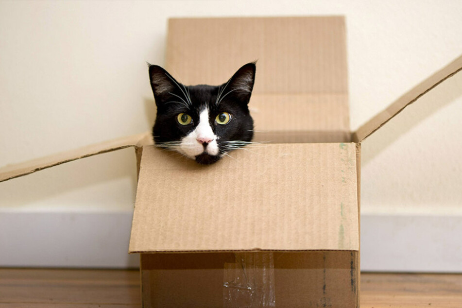 Katzen als Versuchstiere?