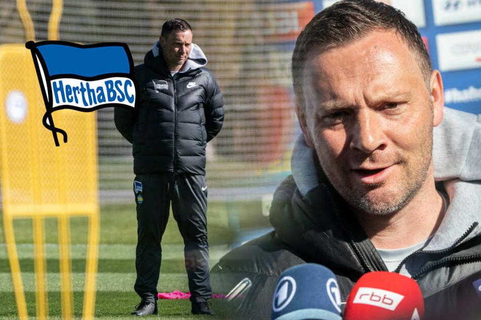 Hertha-Coach vor dem Aus? Jetzt spricht Dardai