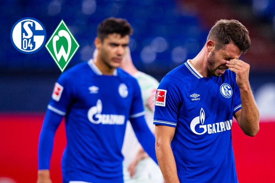 """FC Schalke 04 am Boden: """"Arbeitsverweigerung"""", """"unglaubliche Schande""""!"""