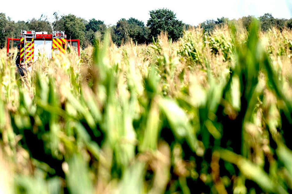 Flugzeug stürzt auf Maisfeld: Pilot hat keine Chance zu überleben
