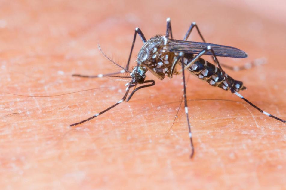 Eine gefährliche, allergische Reaktion durch einen Mückenstich ist unwahrscheinlich.