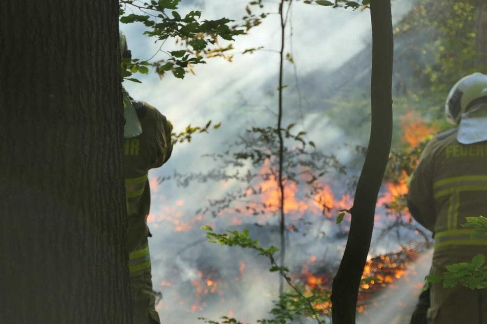 50 bis 100 Quadratmeter in Flammen: Schon wieder Waldbrand bei Grimma!