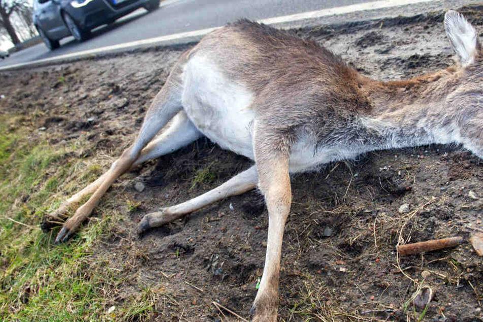 Seit Samstag liegt das erschossene Reh nun schon an der Autobahn. (Symbolbild)