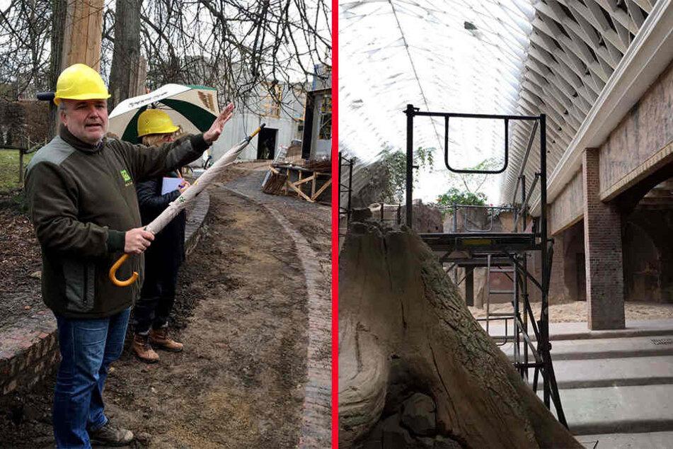 """Zoodirektor Junhold (52) erklärt die Neuerungen, die es in diesem Jahr im Zoo Leipzig zu bestaunen geben wird (li.). Rechts die Baustelle """"Ganesha Mandir"""", das Elefantenhaus."""