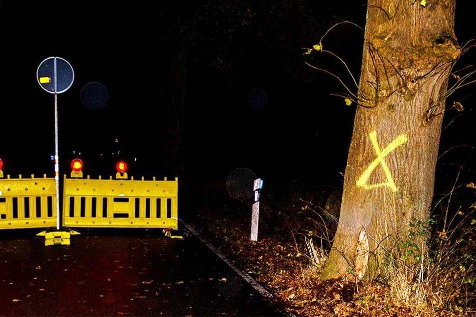 Der Baum wurde bereits markiert, damit er am Montag gefällt werden kann.