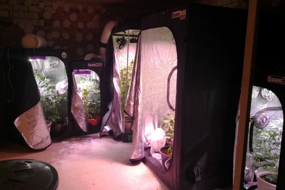 Unbekannte hatten den Cannabis-Geruch aus dem Keller gemeldet.