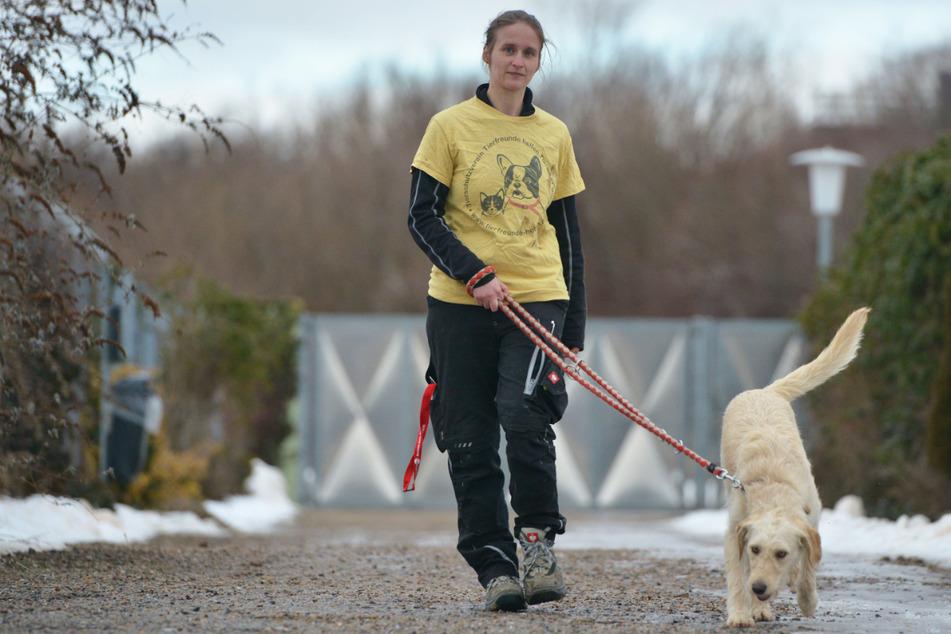 Zwickau: Politiker fordern Steuerfreiheit für adoptierte Tierheim-Hunde