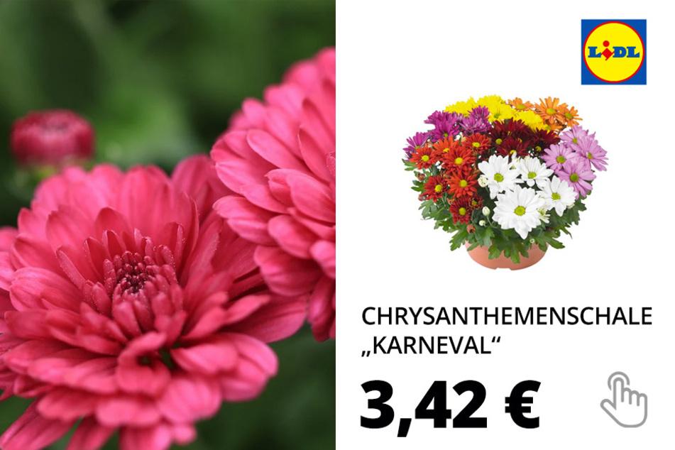 "Chrysanthemenschale ""Karneval"""