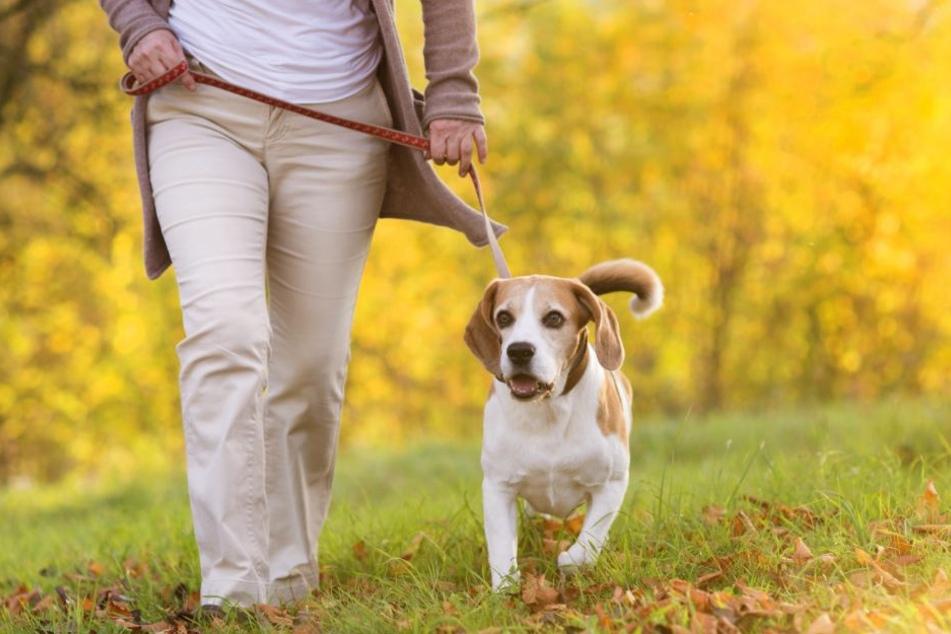 Hundehalter sollten ihren Vierbeiner in jedem Fall anleinen. (Symbolbild)