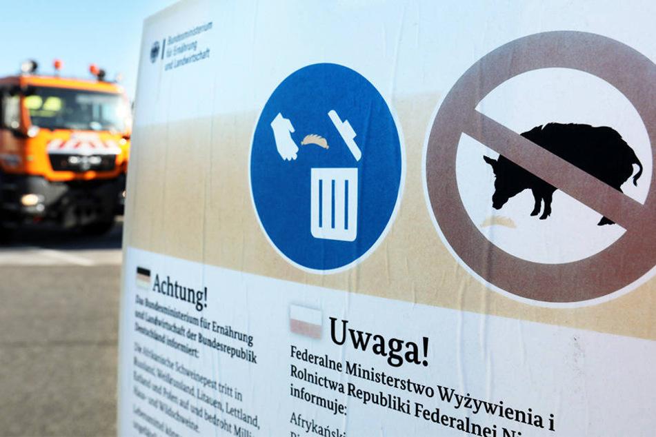 Dass die Schweinepest auch nach Deutschland kommt, ist wohl kaum zu verhindern.