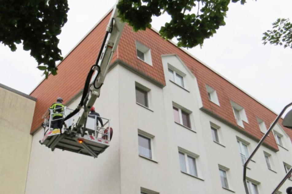 Einsatzkräfte der Feuerwehr und ein Vogelschutzexperte des NABU Leipzig befreiten die Tiere.