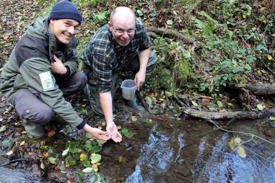 Die Tiere wurden in einem bewusst nicht genannten Bach im Nationalpark Eifel ausgesetzt.