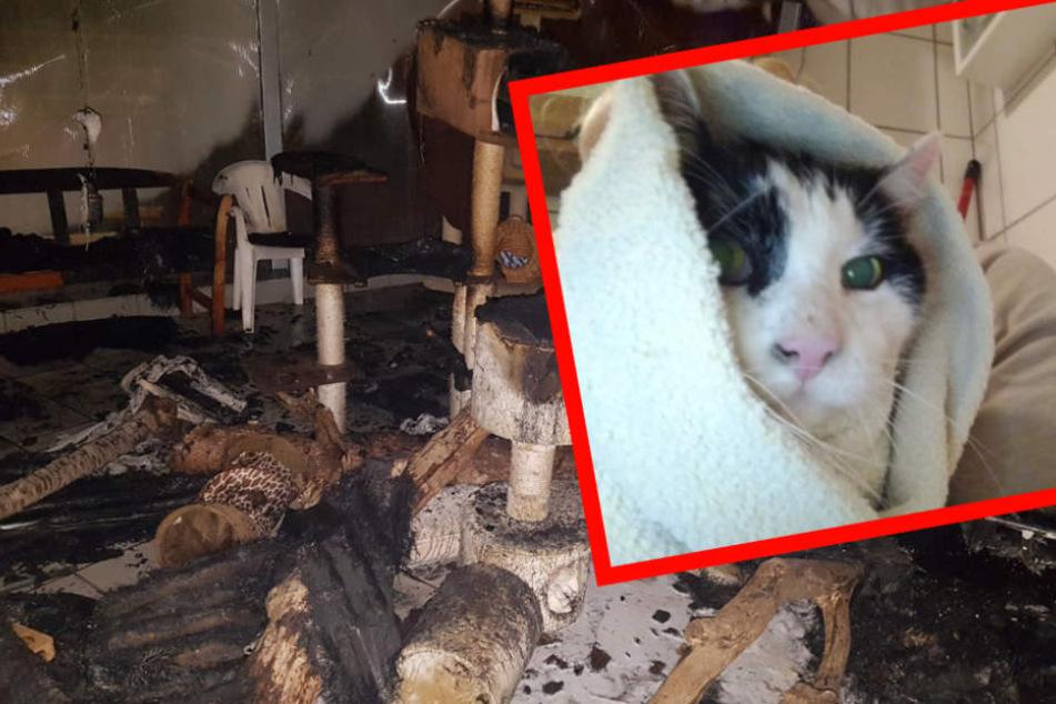 Das Zuhause zahlreicher Samtpfoten wurde durch das Feuer zerstört.