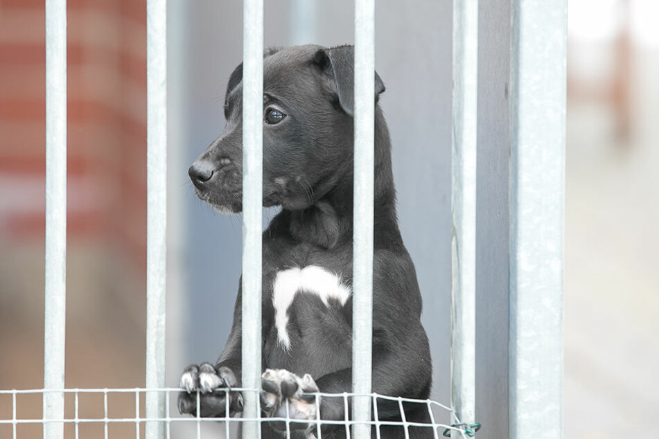 Der kleine Mischlingswelpe ist einer von 34 Hunden, die ein neues Zuhause suchen.