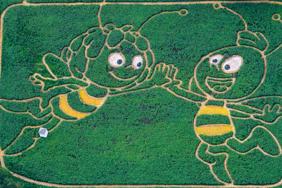 Grandiose Idee: Biene Maja und ihr Freund Willi sind Grundlage für ein Labyrinth.