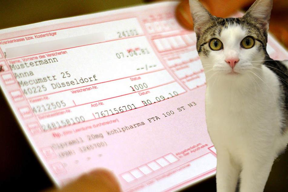 Die Rezepte flogen auf, als die Frau Antibiotika für ihre Katzen holen wollte.