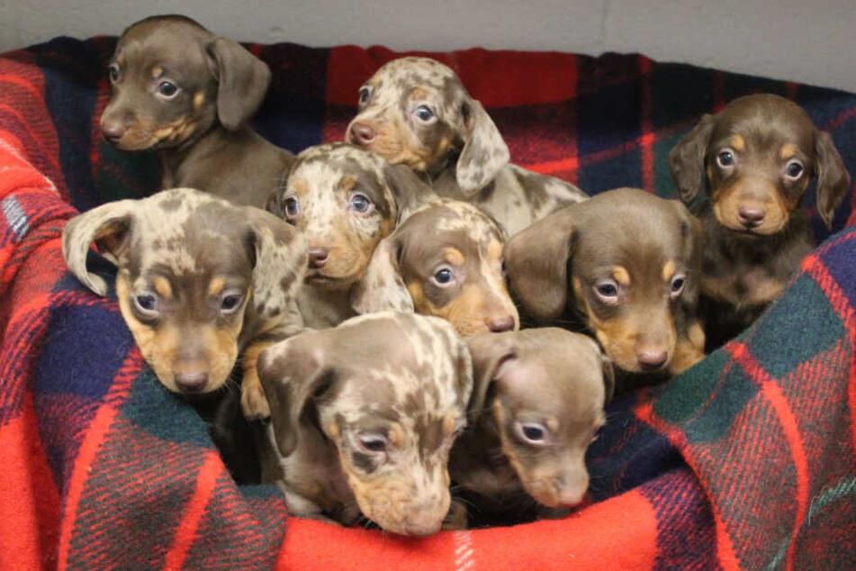 Tierheim denkt sich witzige Namen für diese süßen Hundewelpen aus
