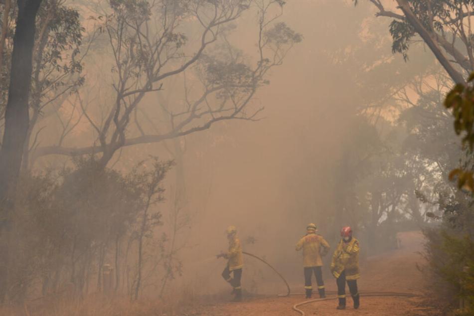 Die Lage im Kampf gegen die Buschfeuer in Australien spitzt sich weiterhin zu.